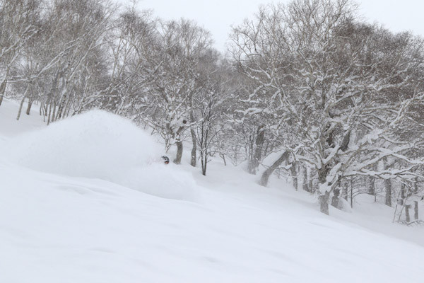niseko_powder_BC_guide (10)