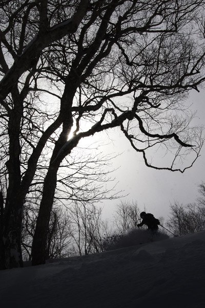 niseko_powder_BC_guide (6)